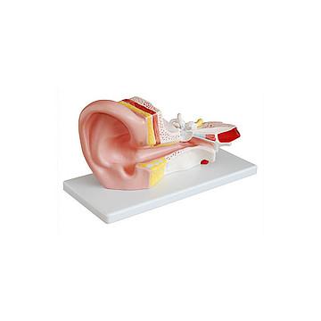 宸博 耳解剖模型 CB/XC303B