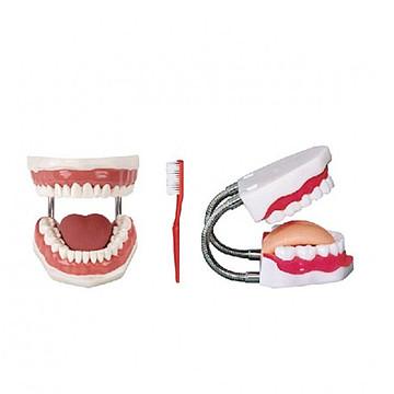 优模YOMO 牙护理保健模型 BOU/H11