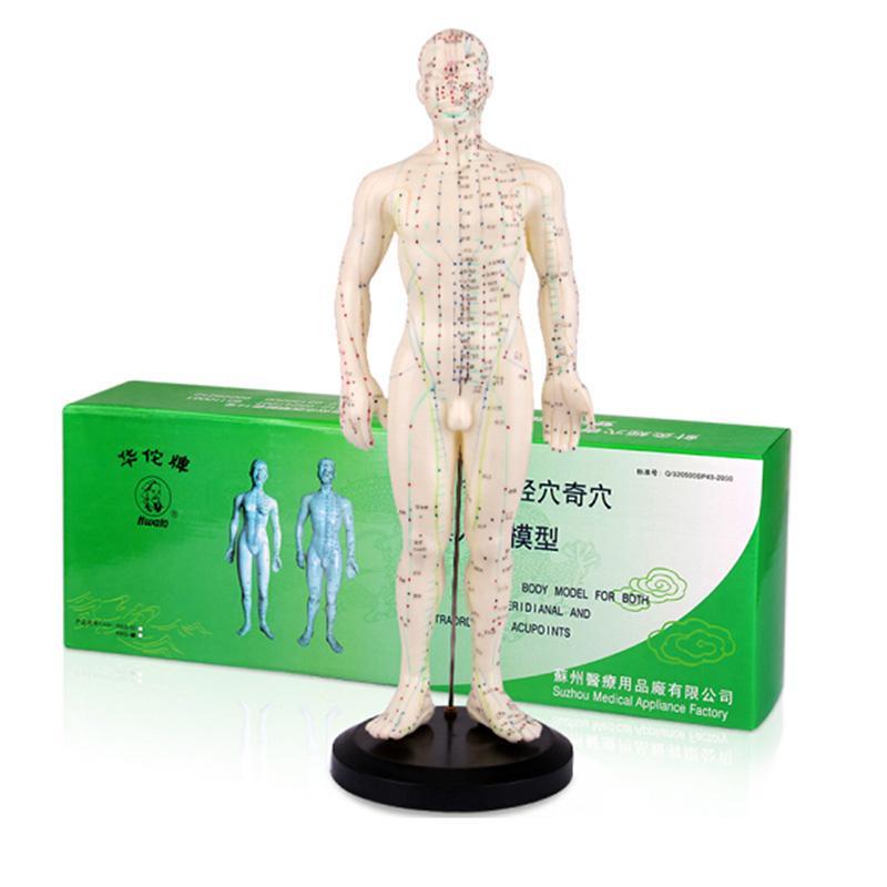 华佗Hwato 针灸模型 塑料26cm (1只)