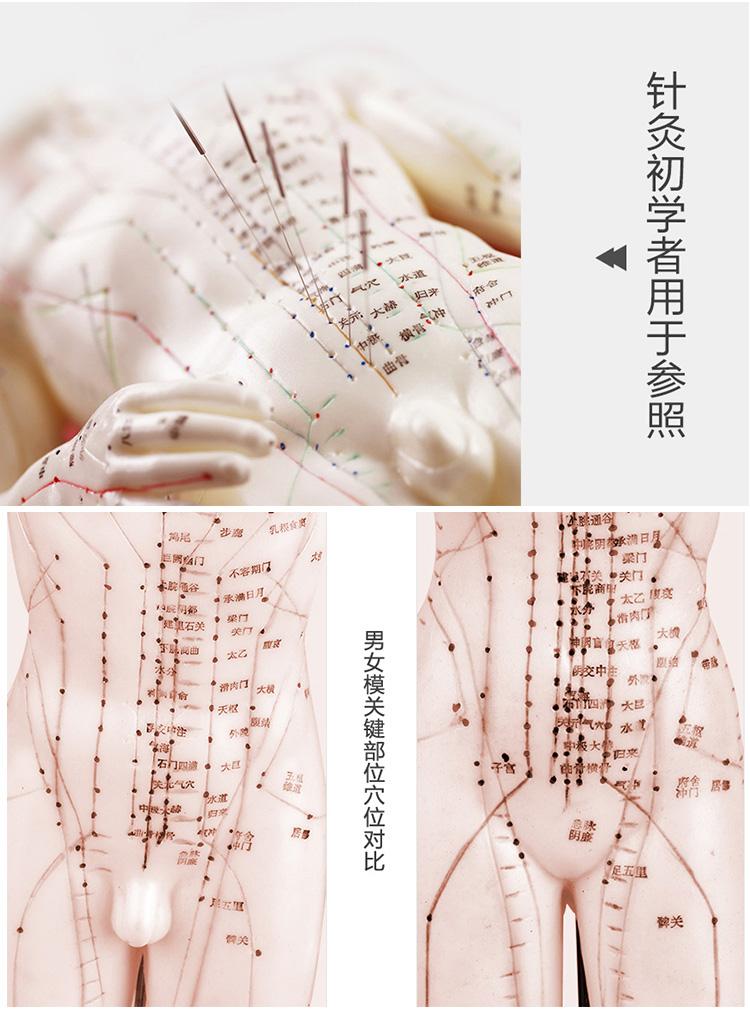 华佗Hwato针灸人体模型详情_05.jpg